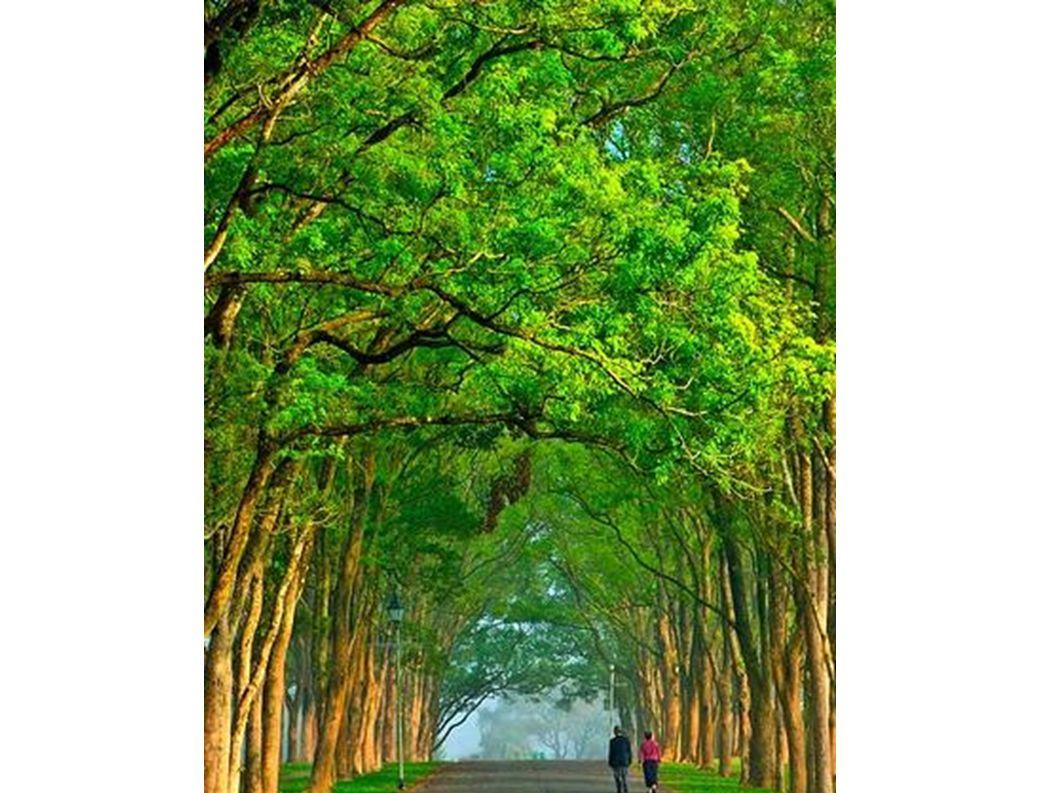 Bäume sind oft grün.