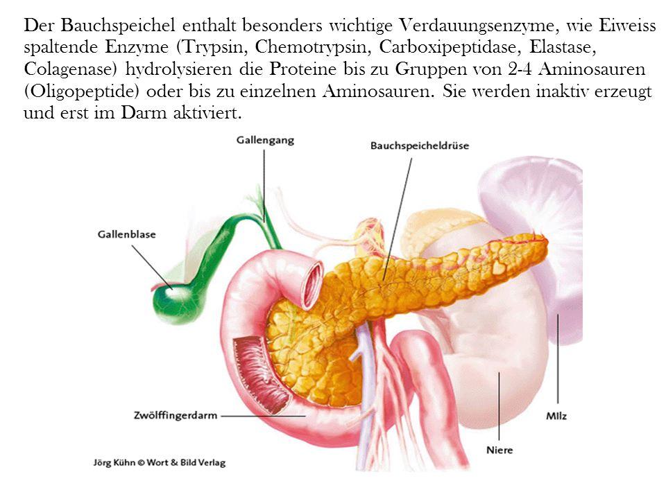 Um die einzelnen Bestandteile der Nahrung zu spalten, muss die Bauchspeicheldrüse verschiedene Arten von Enzymen produzieren, die unterschiedliche Aufgaben erfüllen: Die Spaltung von Eiweiß Die Spaltung von Fetten Die Spaltung der Kohlenhydrate