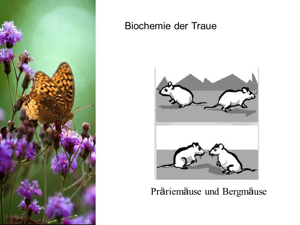 Biochemie der Traue Pr ä riem ä use und Bergm ä use