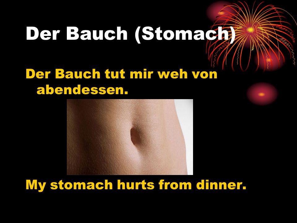 Der Bauch (Stomach) Der Bauch tut mir weh von abendessen. My stomach hurts from dinner.