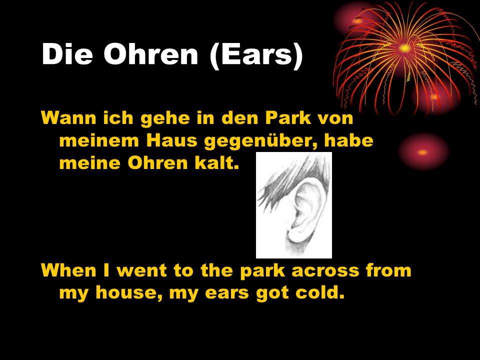 Die Ohren (Ears) Wann ich gehe in den Park von meinem Haus gegenüber, habe meine Ohren kalt. When I went to the park across from my house, my ears got