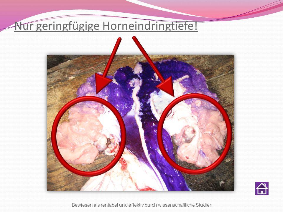 Nur geringfügige Horneindringtiefe! Most dye remained in the cervix and uterus. Bewiesen als rentabel und effektiv durch wissenschaftliche Studien