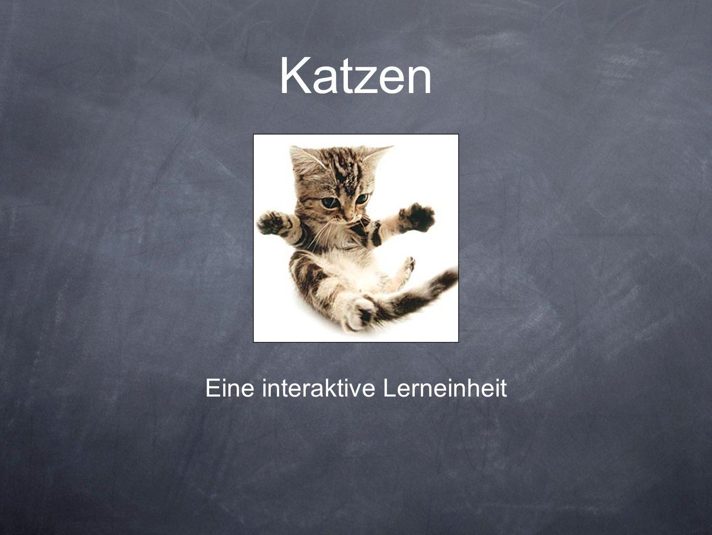 Katzen Eine interaktive Lerneinheit
