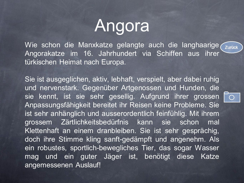 Angora Wie schon die Manxkatze gelangte auch die langhaarige Angorakatze im 16. Jahrhundert via Schiffen aus ihrer türkischen Heimat nach Europa. Sie