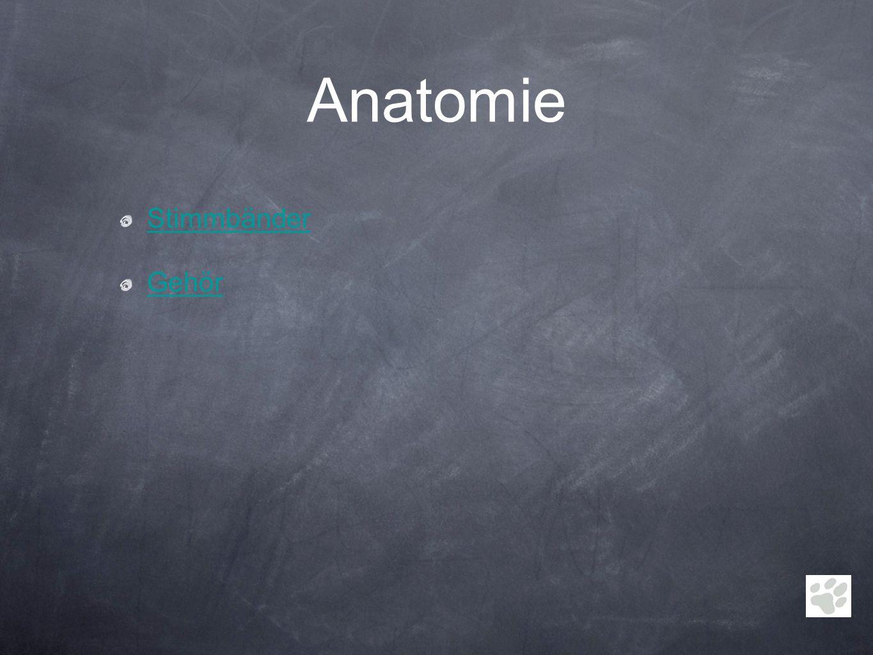 Anatomie Stimmbänder Gehör