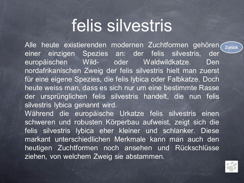felis silvestris Alle heute existierenden modernen Zuchtformen gehören einer einzigen Spezies an: der felis silvestris, der europäischen Wild- oder Wa