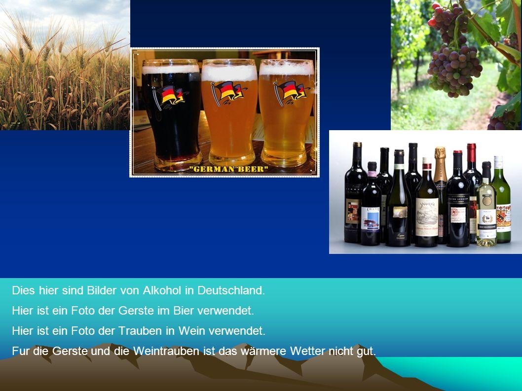 Dies hier sind Bilder von Alkohol in Deutschland.Hier ist ein Foto der Gerste im Bier verwendet.