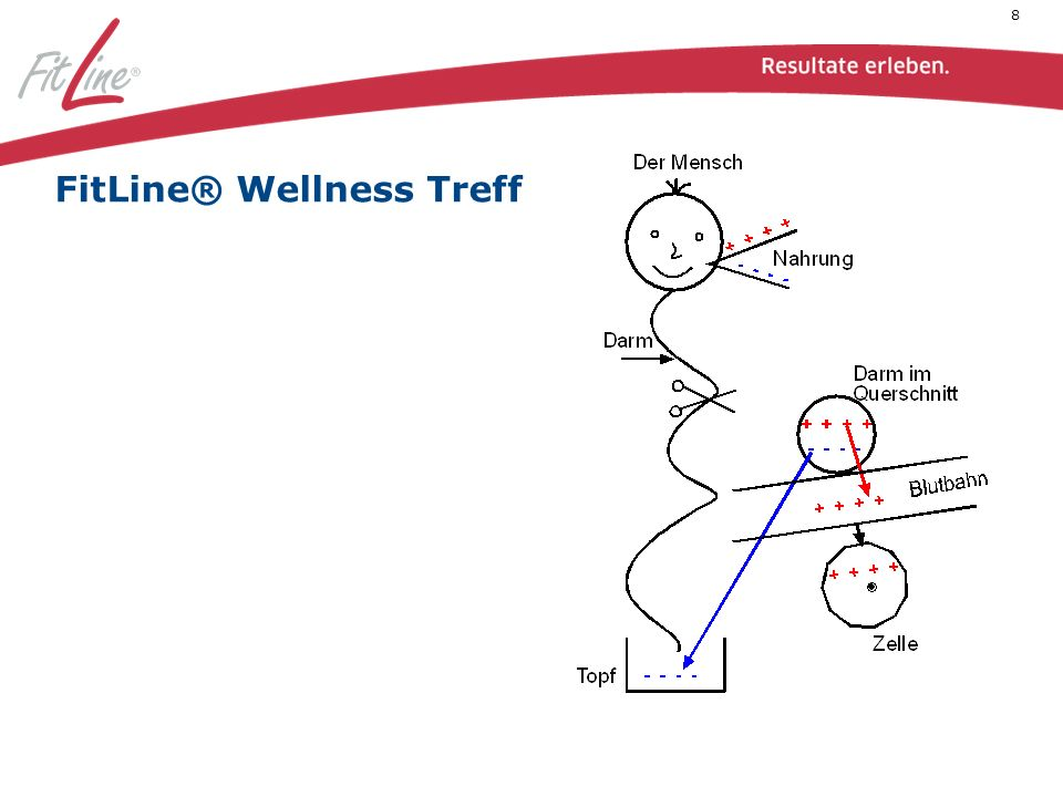 Ein gesunder Darm sortiert die Schlechten (-) in den Topf und die Guten (+) über die Darmschleimhaut durch die Blutbahn hin zur Zelle.