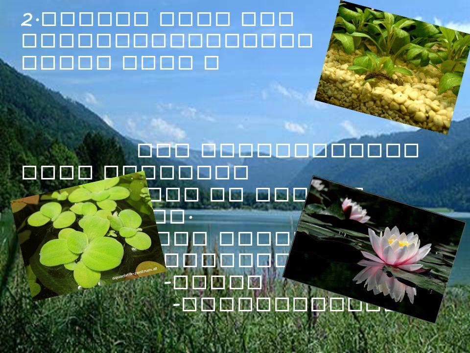 2. Welche sind die Vegetazionszonen eines Sees ? Die Vegetationen sind Pflanzen die im wasser uberleben. Als beispiele : - Seerose - Algen - Wassersal