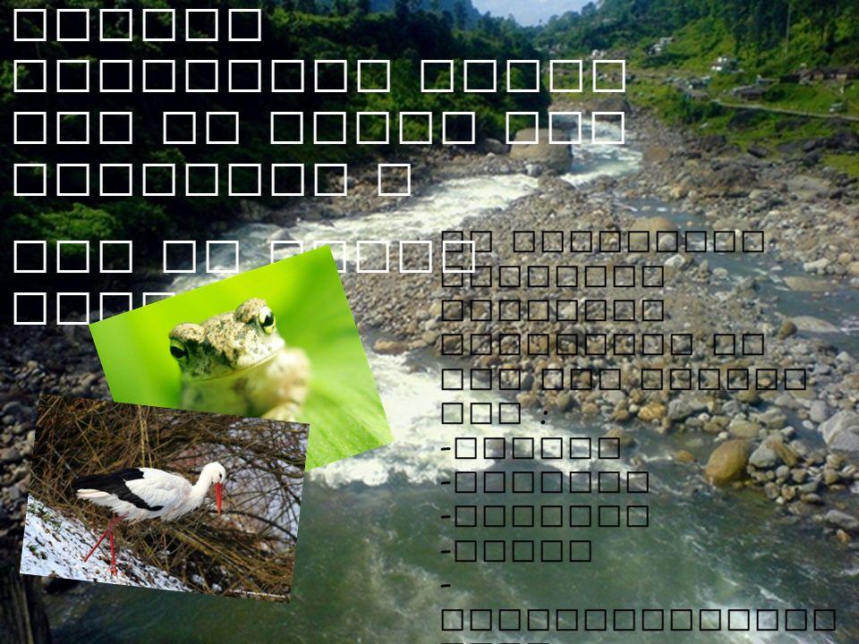 In allgemein erkennen Menschen Lebewesen in See und Teiche wie : - Fische - Frosche - Seerose - Algen - Wasserschwertl inie - Schraubenalge - Wasserli
