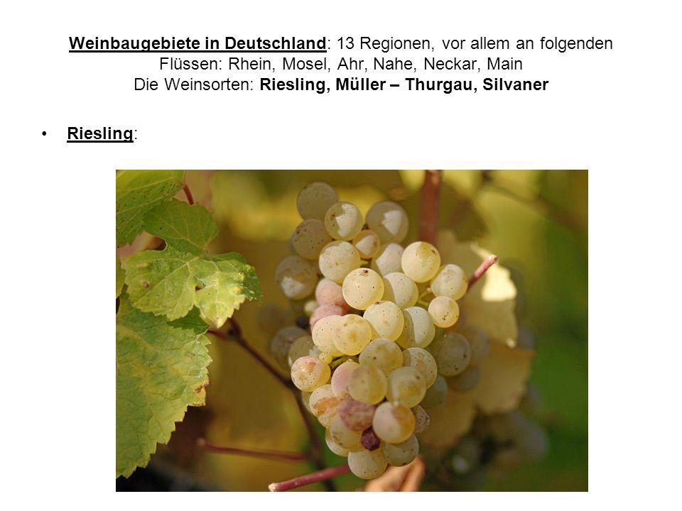 Weinbaugebiete in Deutschland: 13 Regionen, vor allem an folgenden Flüssen: Rhein, Mosel, Ahr, Nahe, Neckar, Main Die Weinsorten: Riesling, Müller – Thurgau, Silvaner Riesling: