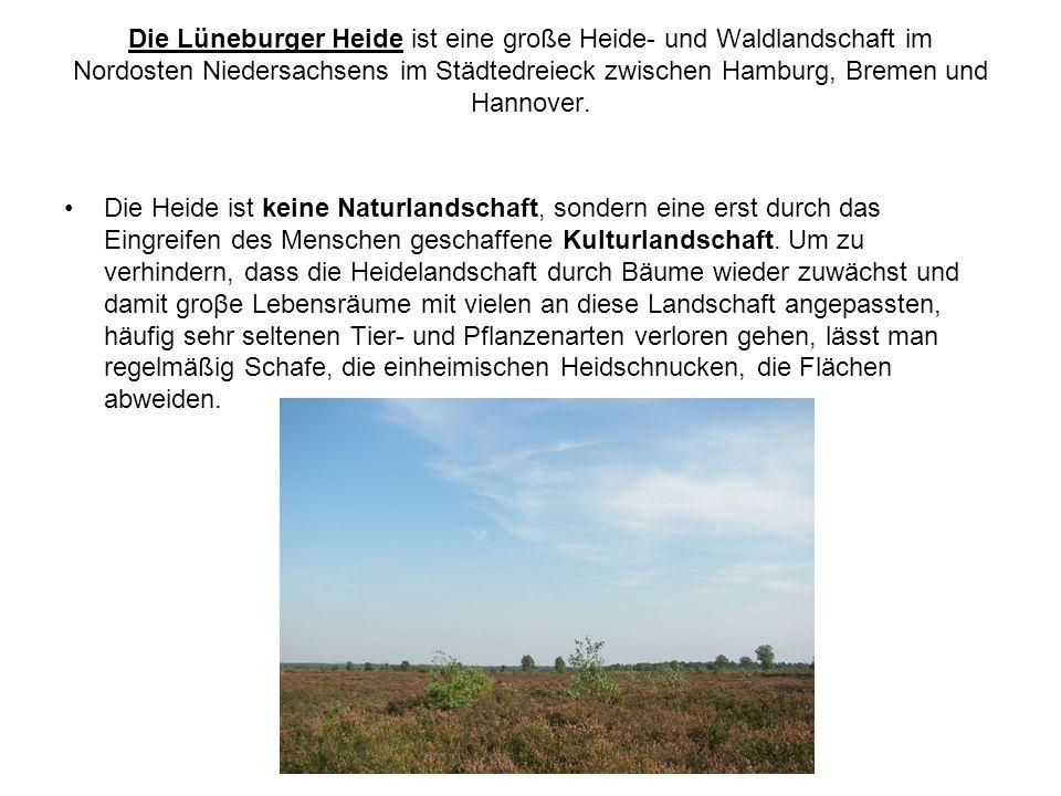 Die Lüneburger Heide ist eine große Heide- und Waldlandschaft im Nordosten Niedersachsens im Städtedreieck zwischen Hamburg, Bremen und Hannover.