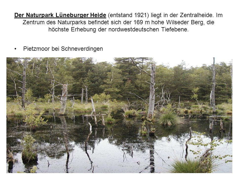 Der Naturpark Lüneburger Heide (entstand 1921) liegt in der Zentralheide. Im Zentrum des Naturparks befindet sich der 169 m hohe Wilseder Berg, die hö