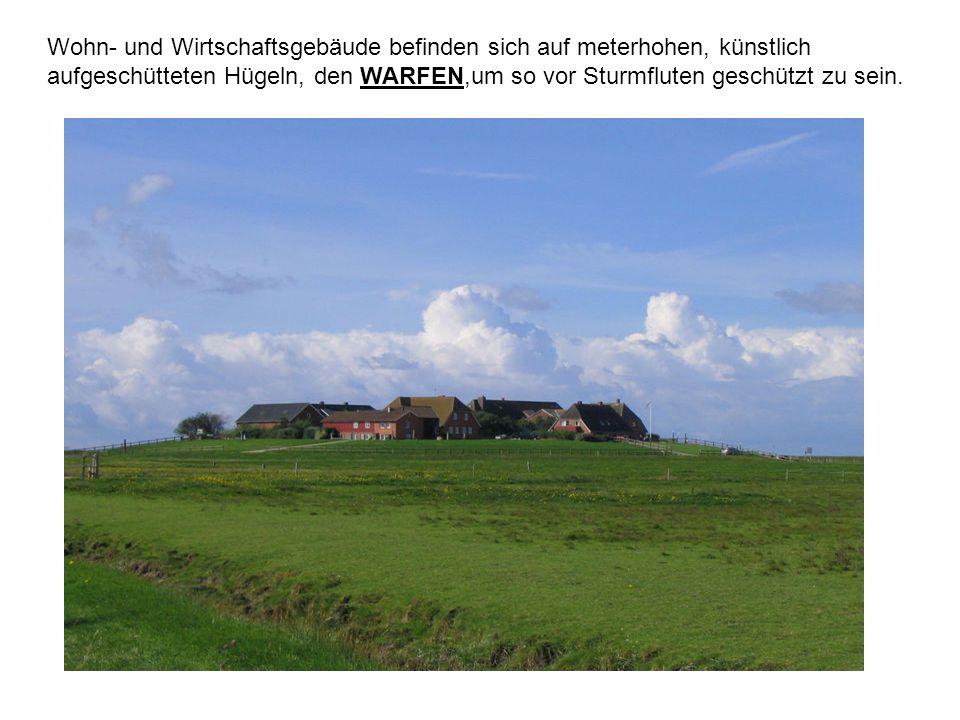 Wohn- und Wirtschaftsgebäude befinden sich auf meterhohen, künstlich aufgeschütteten Hügeln, den WARFEN,um so vor Sturmfluten geschützt zu sein.