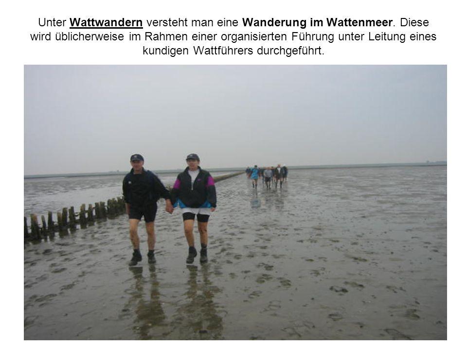 Unter Wattwandern versteht man eine Wanderung im Wattenmeer. Diese wird üblicherweise im Rahmen einer organisierten Führung unter Leitung eines kundig
