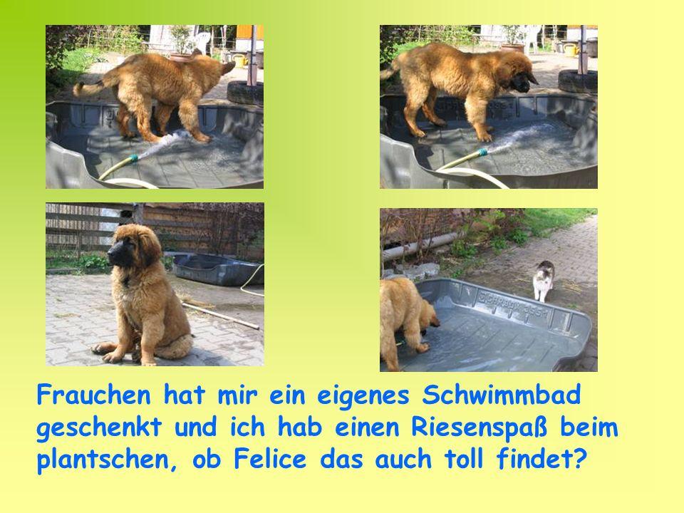 Frauchen hat mir ein eigenes Schwimmbad geschenkt und ich hab einen Riesenspaß beim plantschen, ob Felice das auch toll findet?
