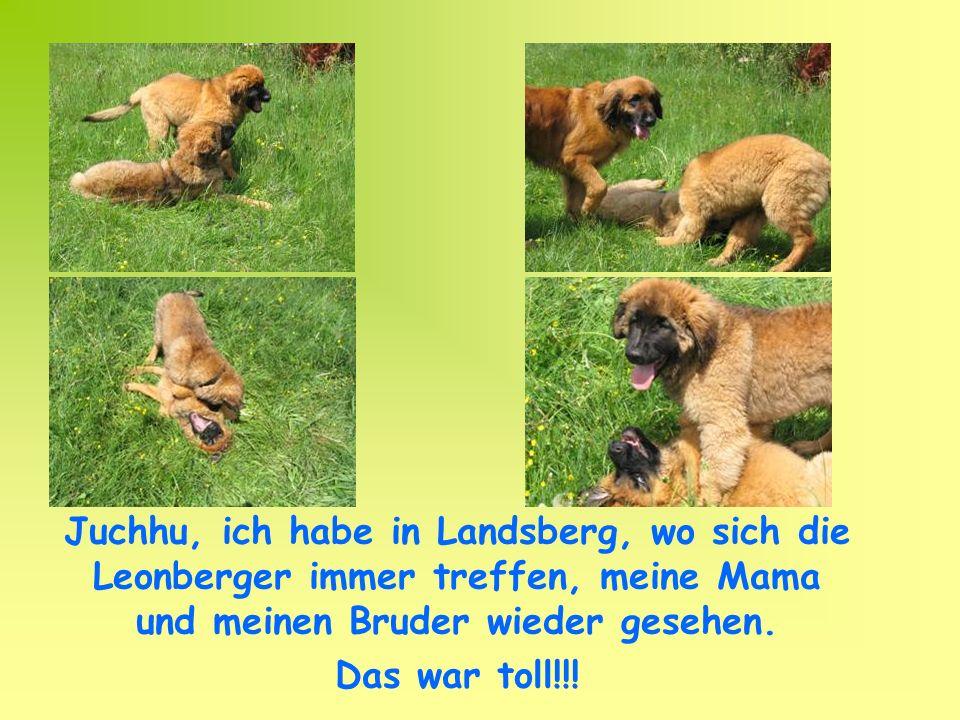 Juchhu, ich habe in Landsberg, wo sich die Leonberger immer treffen, meine Mama und meinen Bruder wieder gesehen.