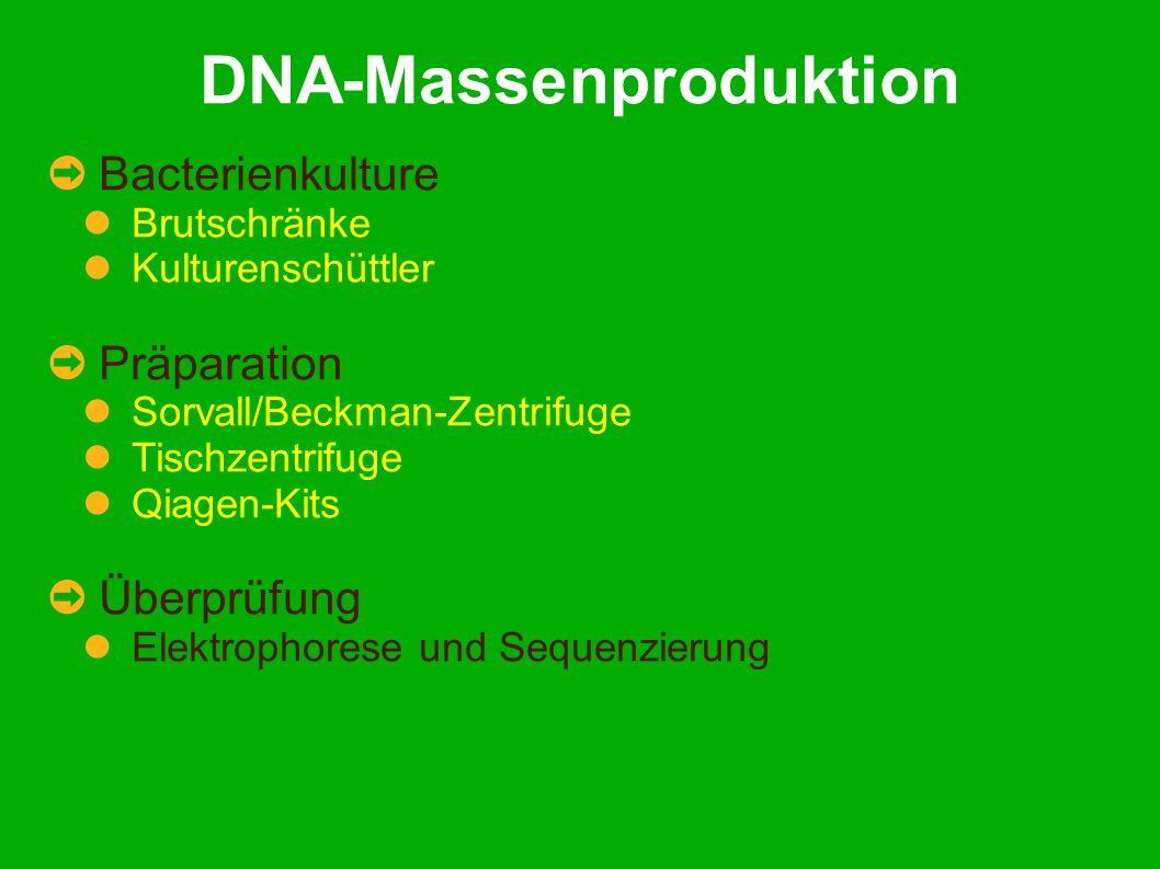 DNA-Massenproduktion Bacterienkulture Brutschränke Kulturenschüttler Präparation Sorvall/Beckman-Zentrifuge Tischzentrifuge Qiagen-Kits Überprüfung Elektrophorese und Sequenzierung