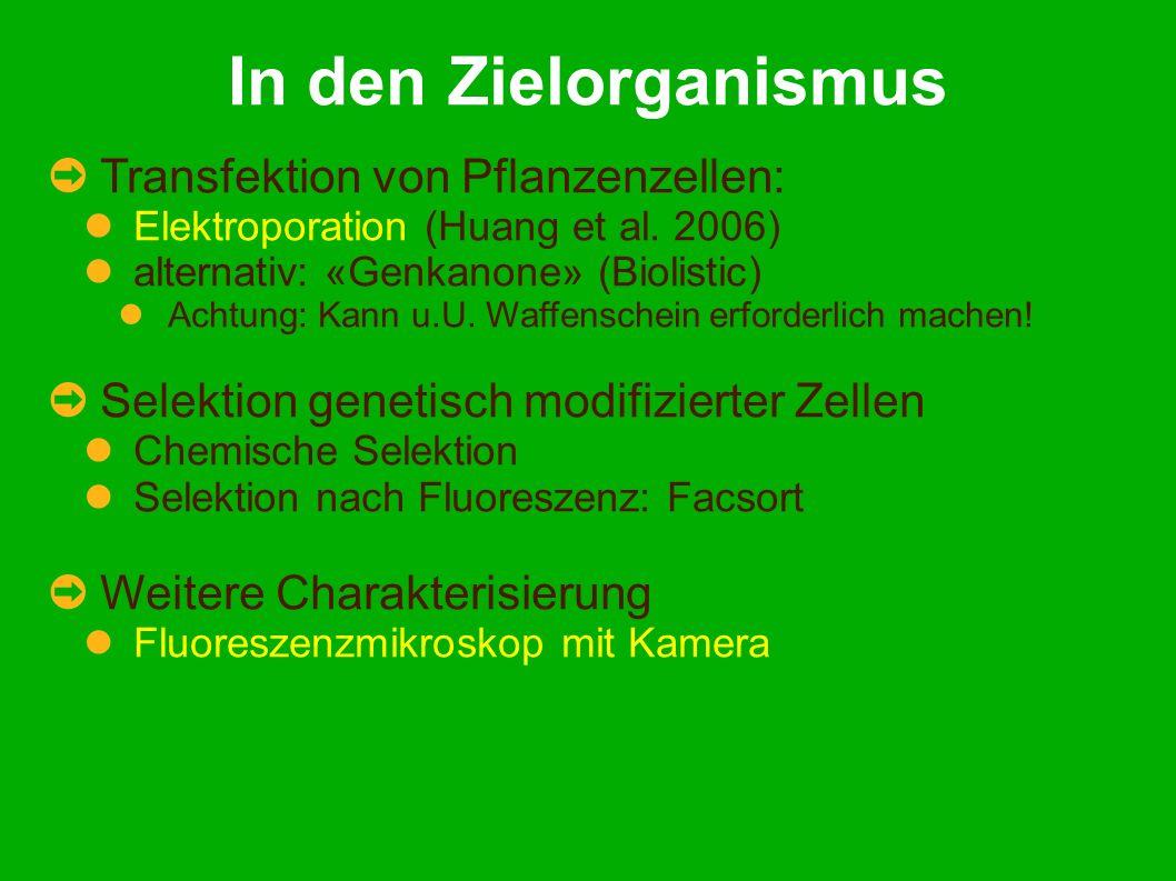 In den Zielorganismus Transfektion von Pflanzenzellen: Elektroporation (Huang et al.