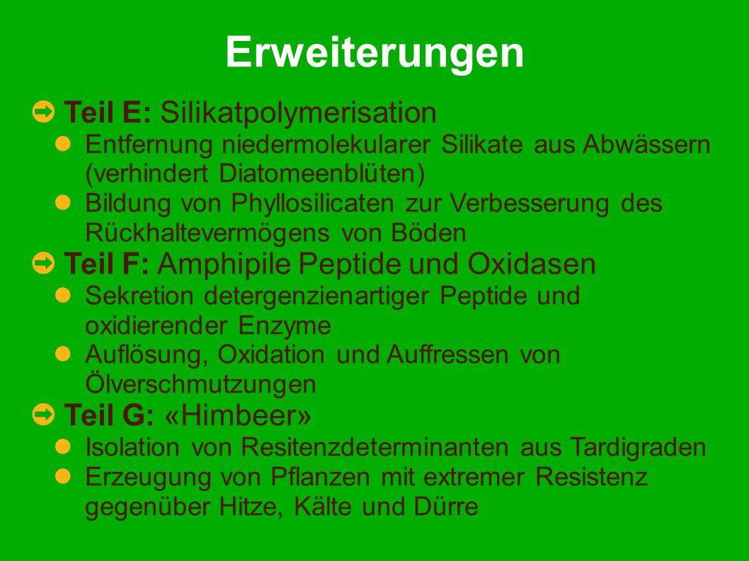 Erweiterungen Teil E: Silikatpolymerisation Entfernung niedermolekularer Silikate aus Abwässern (verhindert Diatomeenblüten) Bildung von Phyllosilicaten zur Verbesserung des Rückhaltevermögens von Böden Teil F: Amphipile Peptide und Oxidasen Sekretion detergenzienartiger Peptide und oxidierender Enzyme Auflösung, Oxidation und Auffressen von Ölverschmutzungen Teil G: «Himbeer» Isolation von Resitenzdeterminanten aus Tardigraden Erzeugung von Pflanzen mit extremer Resistenz gegenüber Hitze, Kälte und Dürre