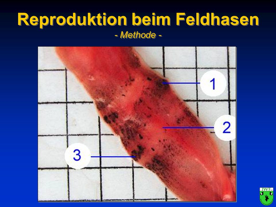Reproduktion beim Feldhasen - Methode -