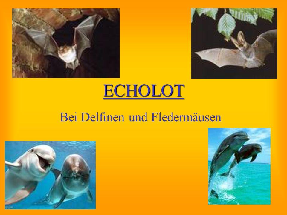 ECHOLOT Bei Delfinen und Fledermäusen