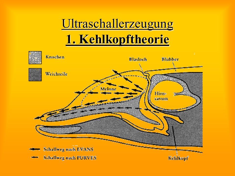 Ultraschallerzeugung 1. Kehlkopftheorie