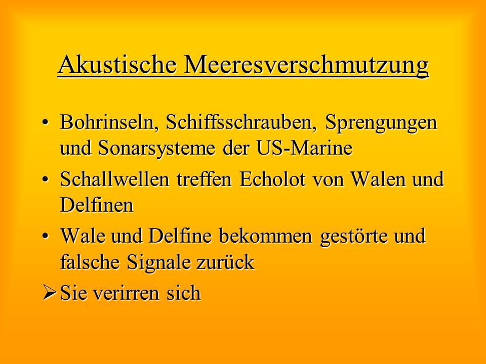 Akustische Meeresverschmutzung Bohrinseln, Schiffsschrauben, Sprengungen und Sonarsysteme der US-MarineBohrinseln, Schiffsschrauben, Sprengungen und S