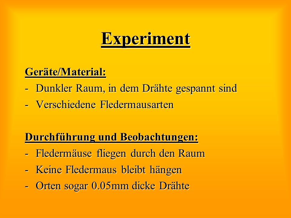 Experiment Geräte/Material: -Dunkler Raum, in dem Drähte gespannt sind -Verschiedene Fledermausarten Durchführung und Beobachtungen: -Fledermäuse flie
