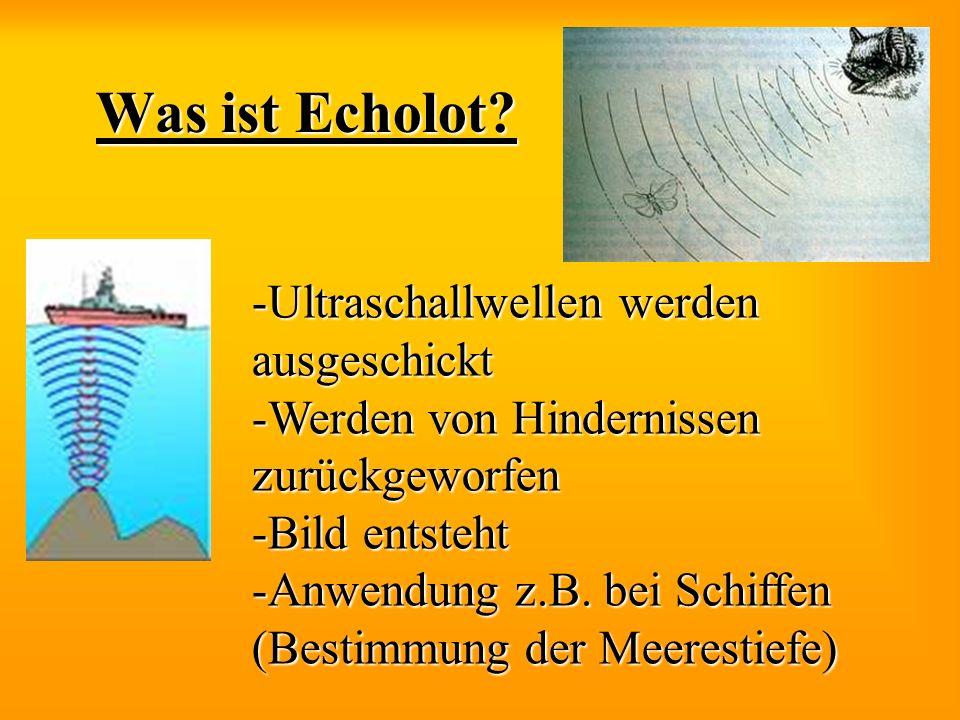 Was ist Echolot? -Ultraschallwellen werden ausgeschickt -Werden von Hindernissen zurückgeworfen -Bild entsteht -Anwendung z.B. bei Schiffen (Bestimmun