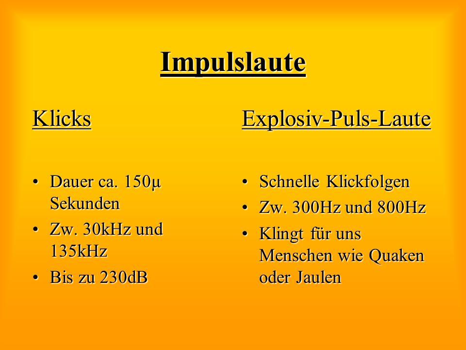 Impulslaute Klicks Dauer ca. 150µ SekundenDauer ca. 150µ Sekunden Zw. 30kHz und 135kHzZw. 30kHz und 135kHz Bis zu 230dBBis zu 230dBExplosiv-Puls-Laute