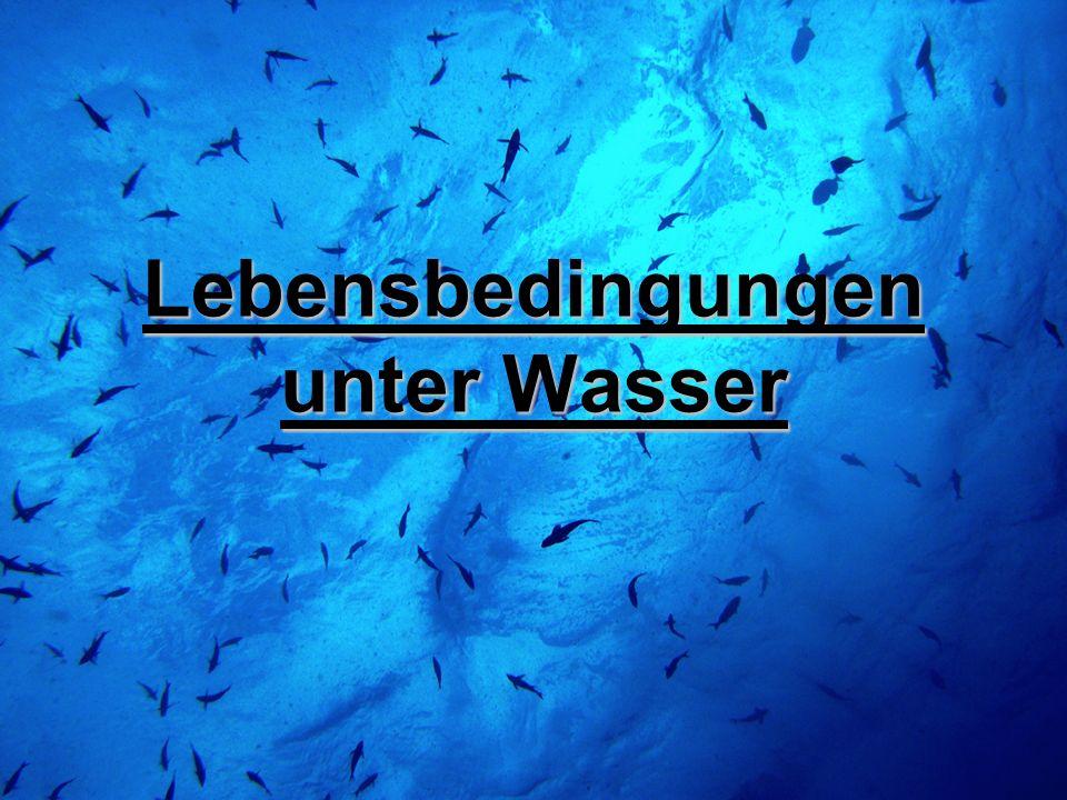 Lebensbedingungen unter Wasser