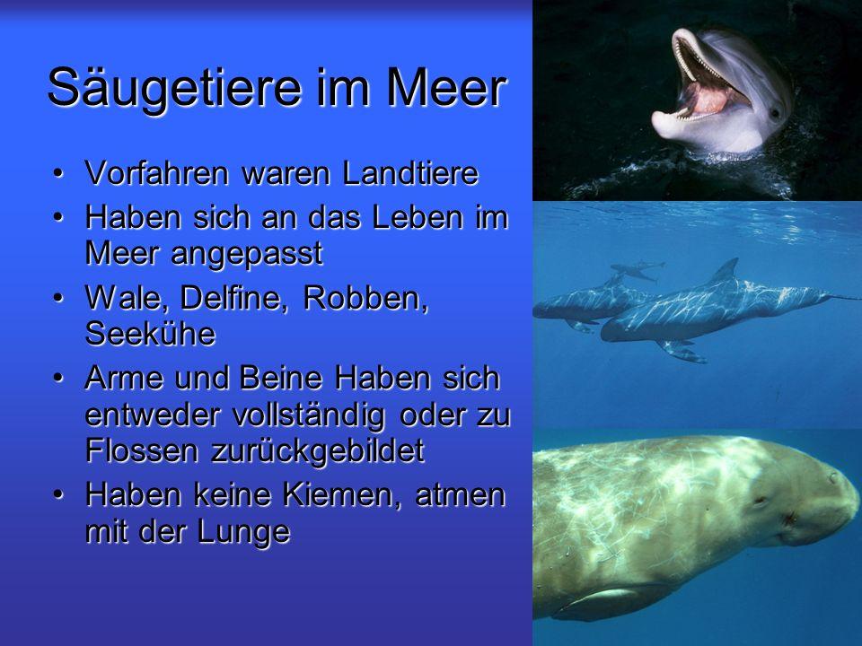 Säugetiere im Meer Vorfahren waren LandtiereVorfahren waren Landtiere Haben sich an das Leben im Meer angepasstHaben sich an das Leben im Meer angepas