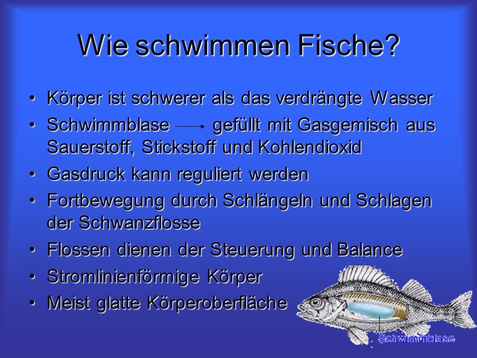 Wie schwimmen Fische? Körper ist schwerer als das verdrängte WasserKörper ist schwerer als das verdrängte Wasser Schwimmblase gefüllt mit Gasgemisch a
