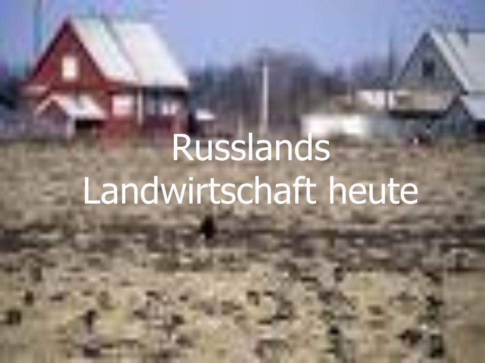Russlands Landwirtschaft heute