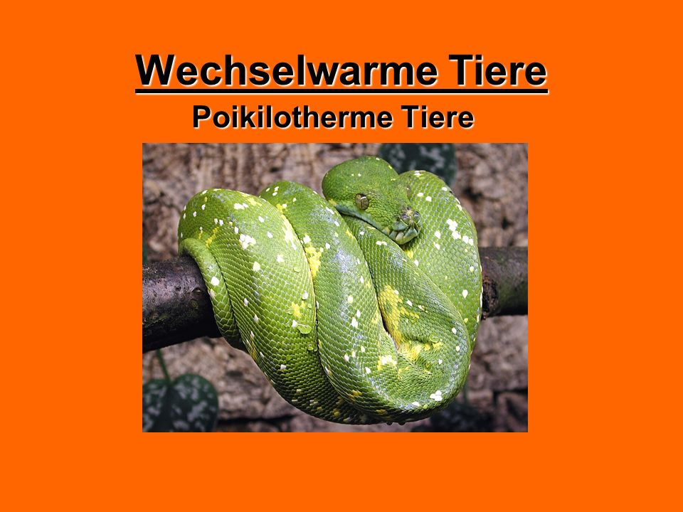 Wechselwarme Tiere Poikilotherme Tiere