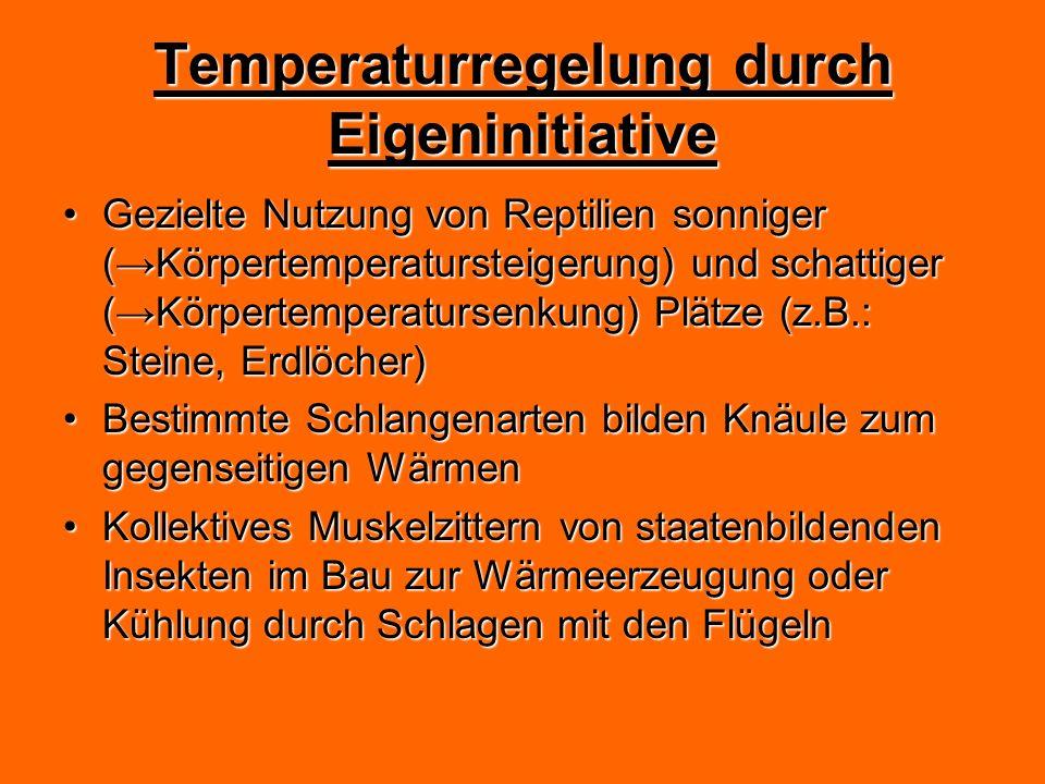 Temperaturregelung durch Eigeninitiative Gezielte Nutzung von Reptilien sonniger (Körpertemperatursteigerung) und schattiger (Körpertemperatursenkung)