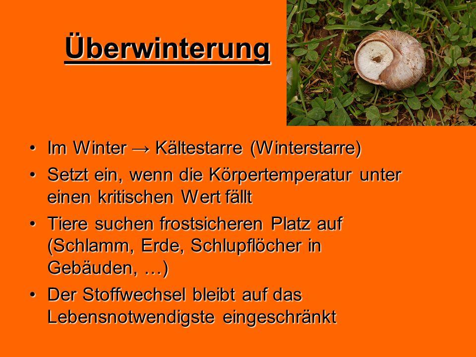Überwinterung Im Winter Kältestarre (Winterstarre)Im Winter Kältestarre (Winterstarre) Setzt ein, wenn die Körpertemperatur unter einen kritischen Wer
