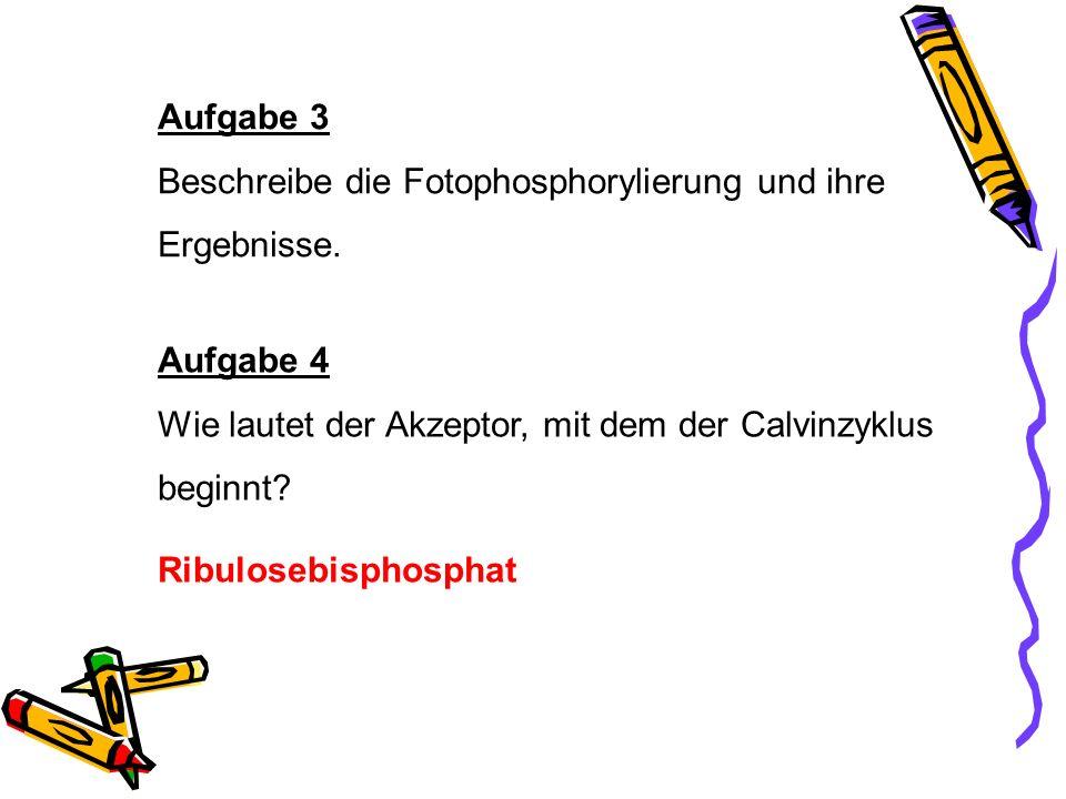 Aufgabe 3 Beschreibe die Fotophosphorylierung und ihre Ergebnisse. Aufgabe 4 Wie lautet der Akzeptor, mit dem der Calvinzyklus beginnt? Ribulosebispho