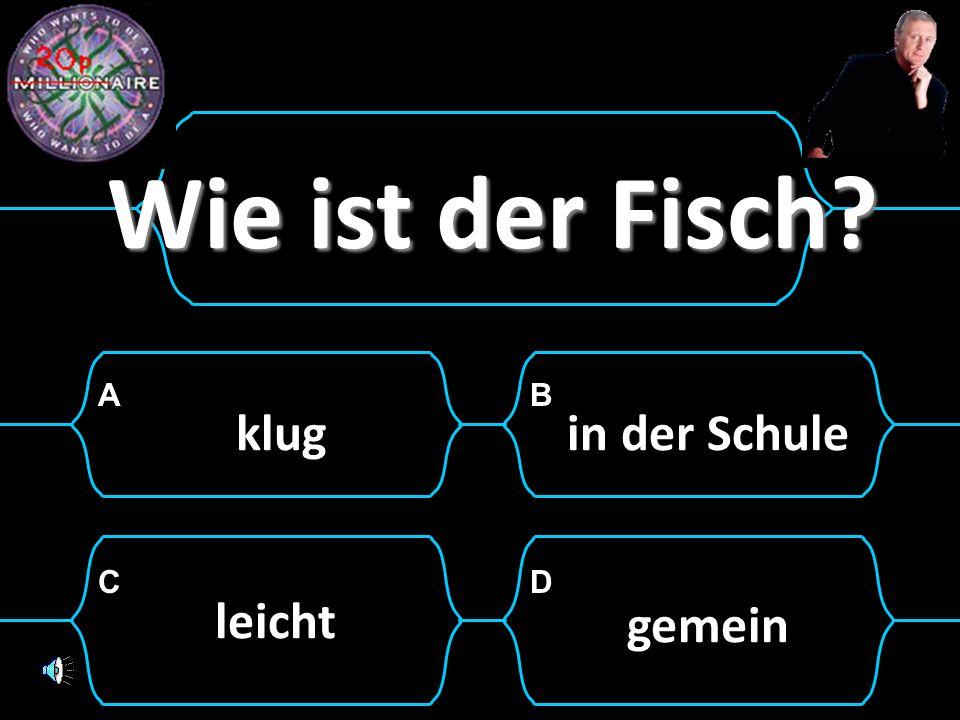 AB CD ___ hast du in Deutsch? Eine 2. WenWer Was