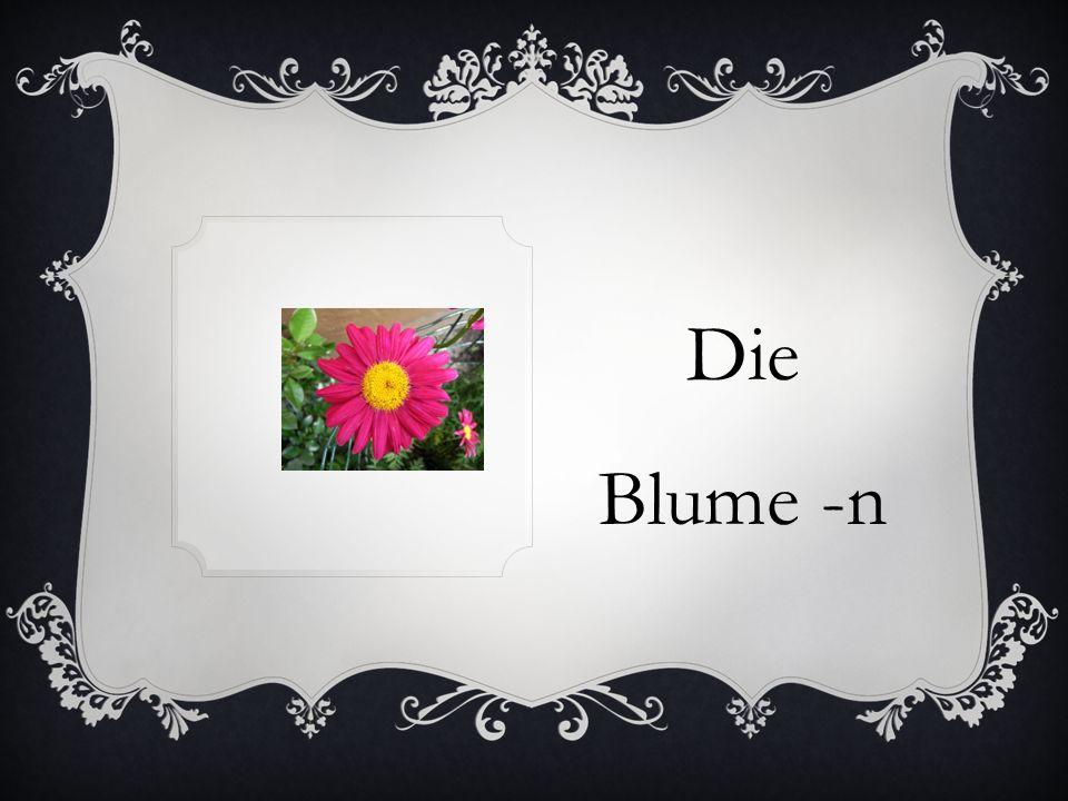 Die Blume -n