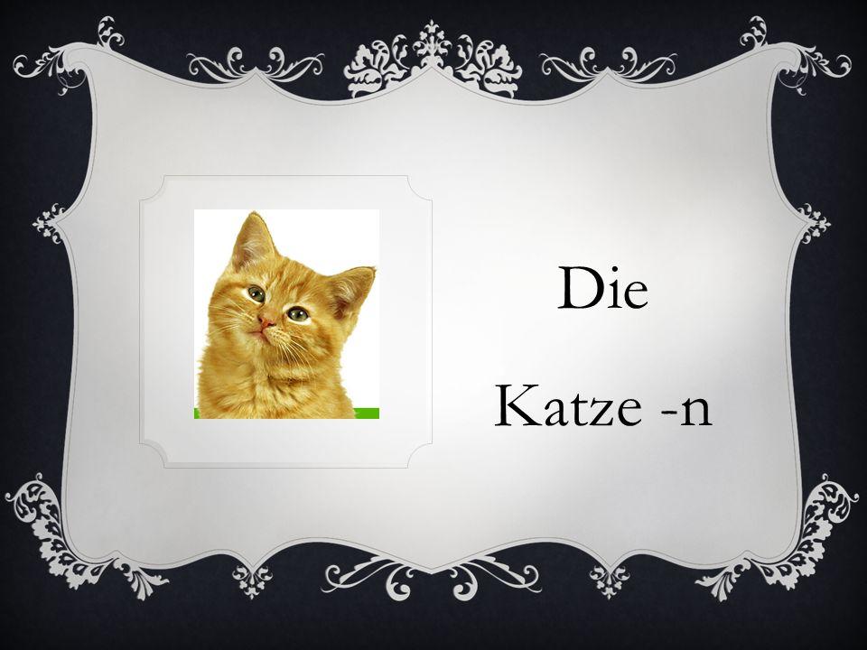Die Katze -n