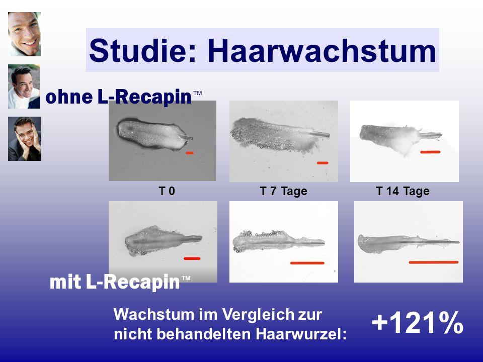 Studie: Haarwachstum ohne L-Recapin Wachstum im Vergleich zur nicht behandelten Haarwurzel: T 0 T 7 Tage T 14 Tage +121% mit L-Recapin