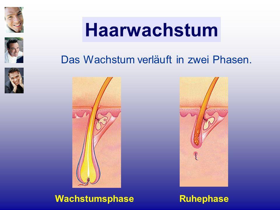 Haarwachstum RuhephaseWachstumsphase Das Wachstum verläuft in zwei Phasen.