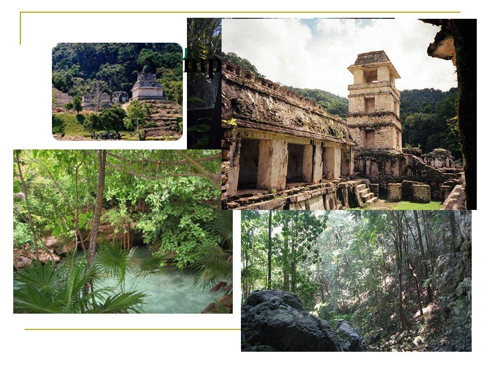 Betrachtung des Dschungels Tempelruinen