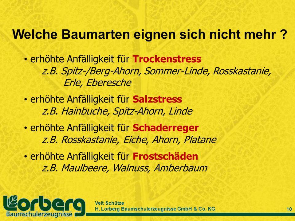 Veit Schütze H. Lorberg Baumschulerzeugnisse GmbH & Co. KG 10 Welche Baumarten eignen sich nicht mehr ? erhöhte Anfälligkeit für Trockenstress z.B. Sp