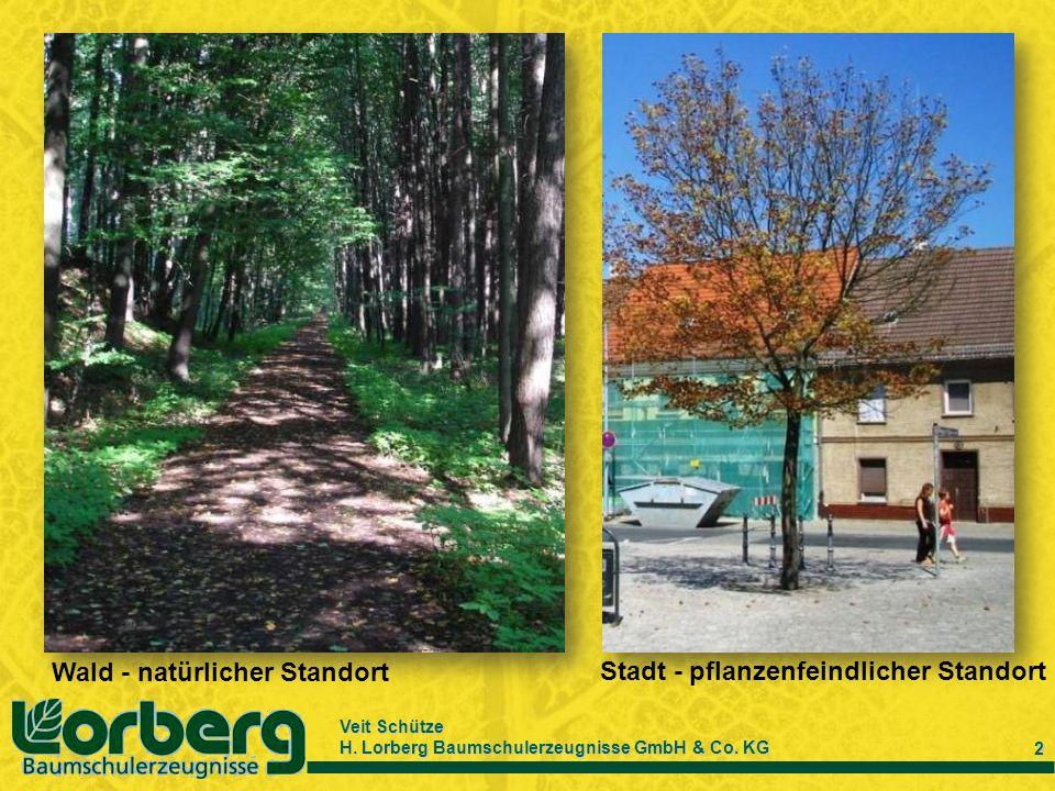 Veit Schütze H. Lorberg Baumschulerzeugnisse GmbH & Co. KG 2 Wald - natürlicher Standort Stadt - pflanzenfeindlicher Standort