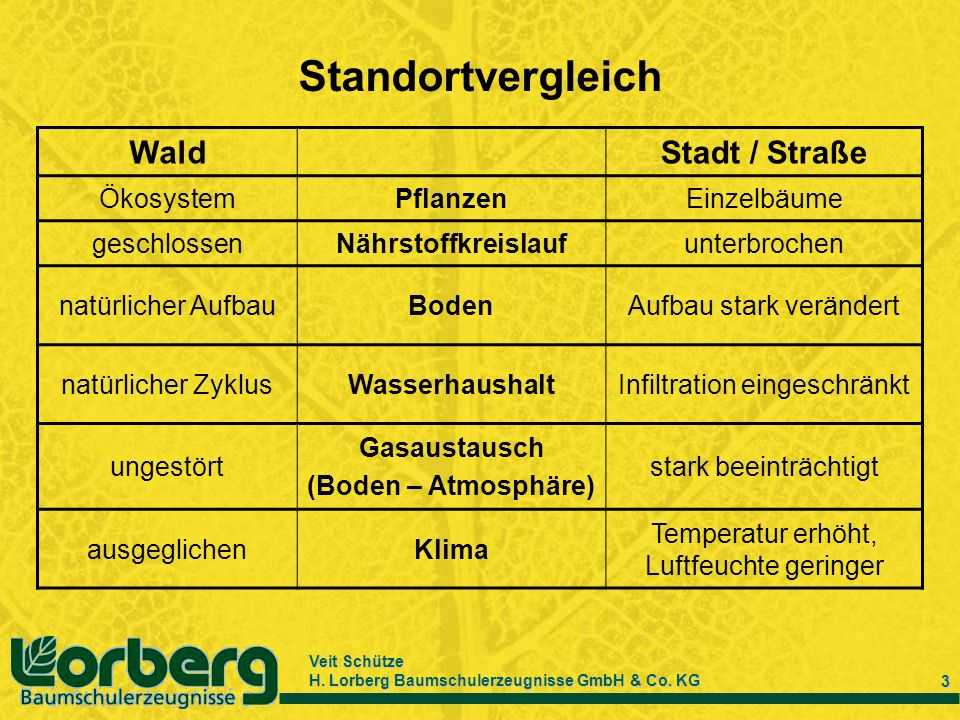 Veit Schütze H. Lorberg Baumschulerzeugnisse GmbH & Co. KG 3 Standortvergleich WaldStadt / Straße ÖkosystemPflanzenEinzelbäume geschlossenNährstoffkre