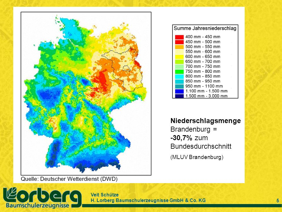 Veit Schütze H. Lorberg Baumschulerzeugnisse GmbH & Co. KG 5 Niederschlagsmenge Brandenburg = -30,7% zum Bundesdurchschnitt (MLUV Brandenburg)