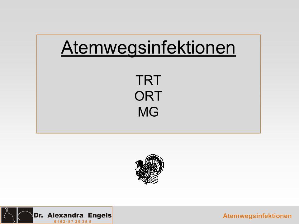 Atemwegsinfektionen TRT ORT MG Atemwegsinfektionen